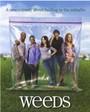 Ver Serie Weeds